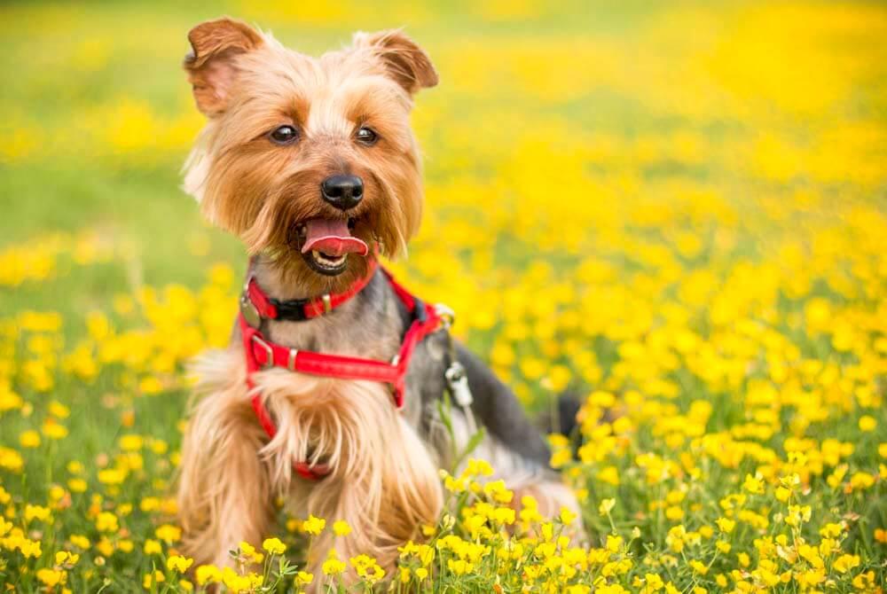 So kommt Ihr Hund gut durch den Sommer