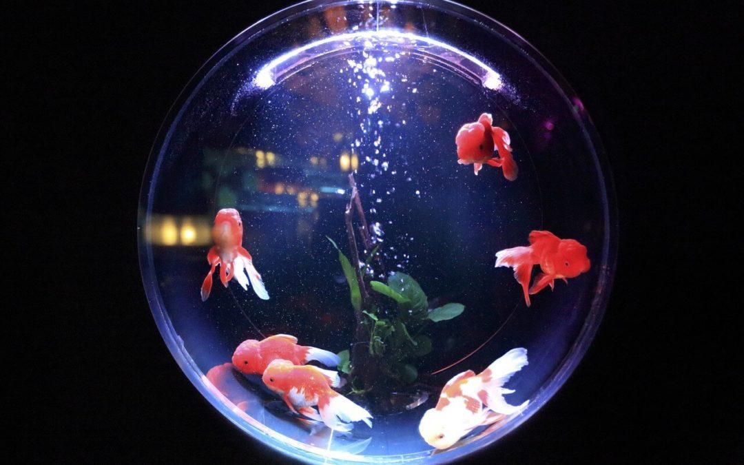Aquarium kaufen – Alles was Sie wissen sollten