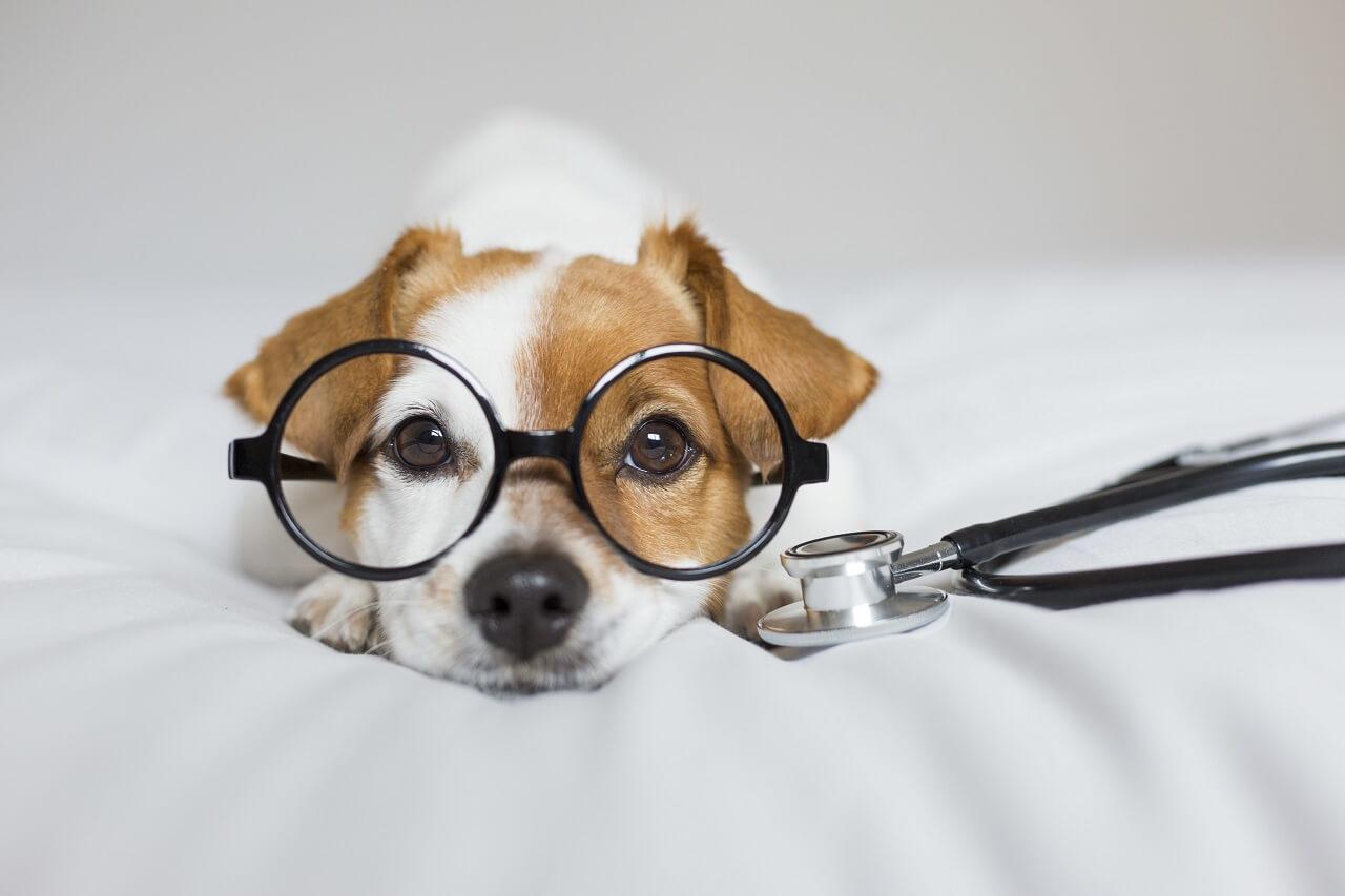 Hunde richtig impfen