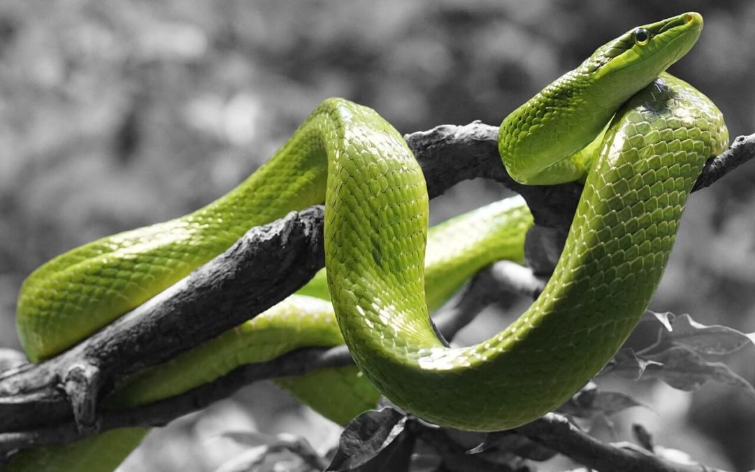 Schlange kaufen – was man beachten sollte