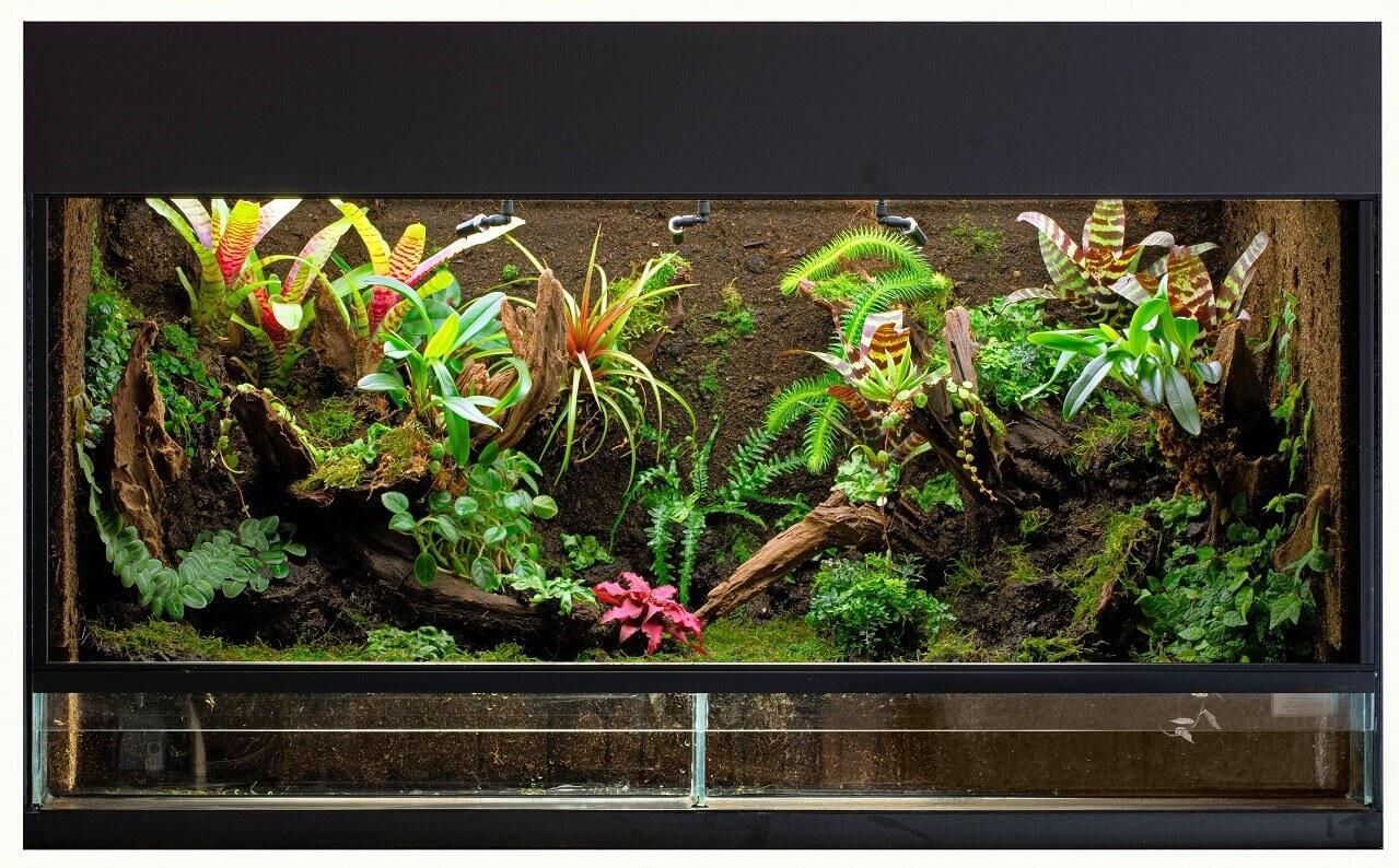 Terrarium kaufen – alles was man beachten sollte