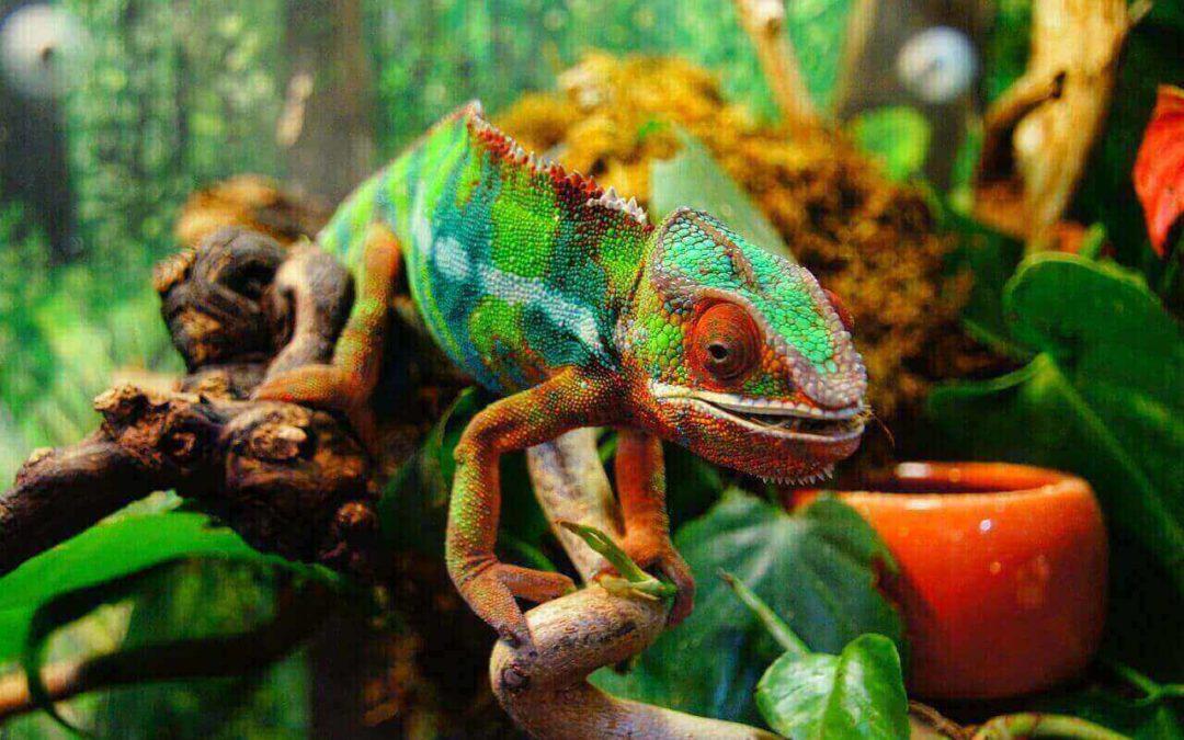 Reptilien kaufen für Einsteiger