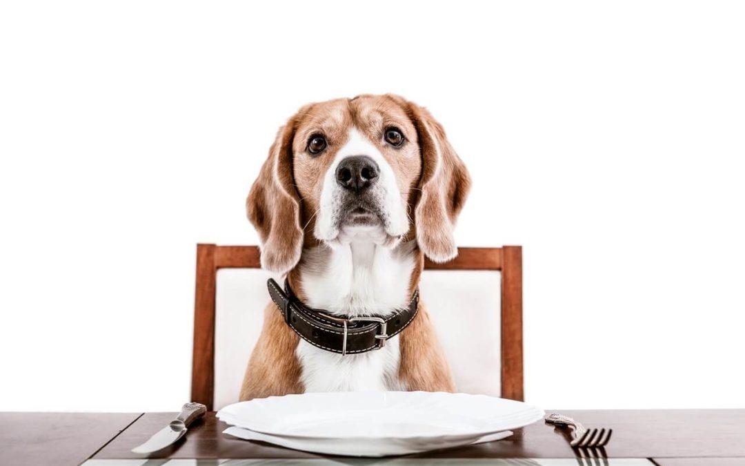 BARFen bei Hunden – 5 nützliche Tipps