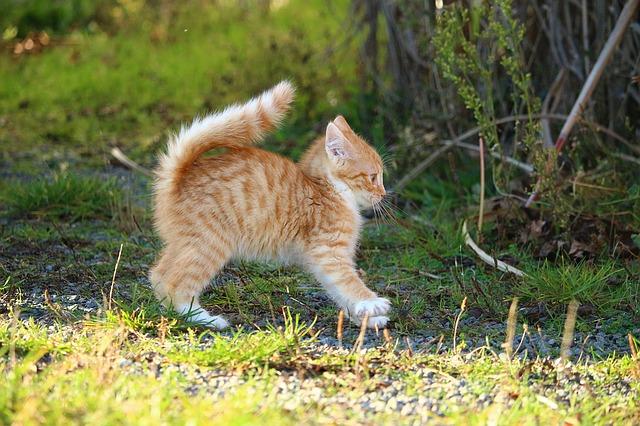 Das Fell von Babykatzen sträubt sich häufiger.