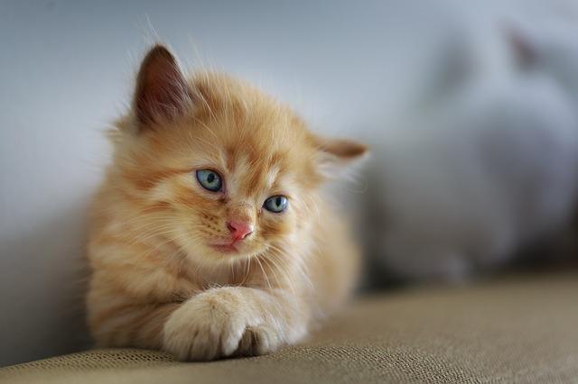 Katzen beobachten ihre Umgebung sehr genau.