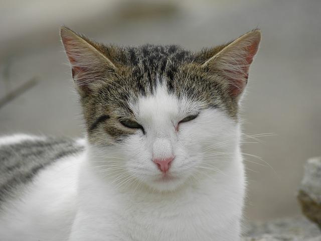Diese Katze lächelt: Sie kann die Augen schließen, weil sie ihrem Besitzer vertraut.