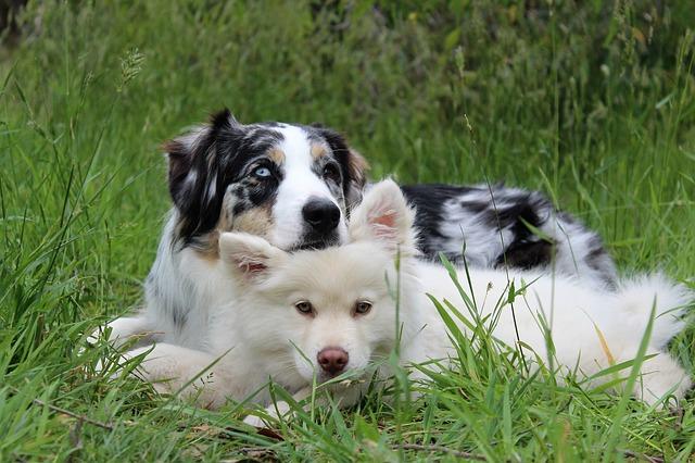 Ein älterer Hund kann deinem Haustier als Vorbild dienen und gleichzeitig ein guter Freund werden.