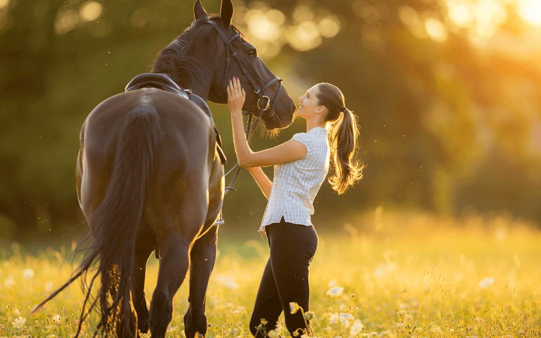 Neues Haustier – warum nicht ein Pferd?