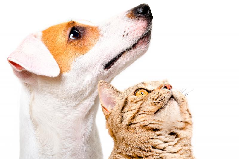 Produkte von NARUMED – Hilfe für Hunde und Katzen