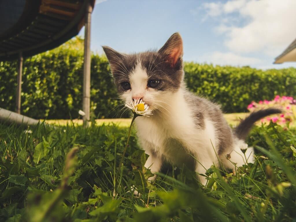 So viel Neues: Während der ersten Tage im neuen Heim gibt es für das junge Kätzchen viel zu entdecken.