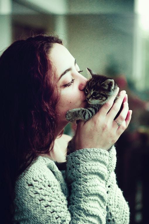 Gibst du deinem Katzenbaby genügend Zeit, wird es dich lieb gewinnen.