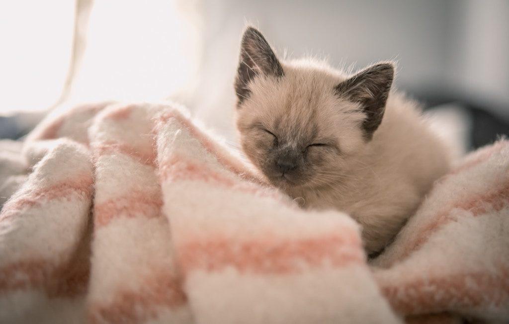 Sei nicht enttäuscht, wenn dein Katzenjunges sehr schüchtern ist.