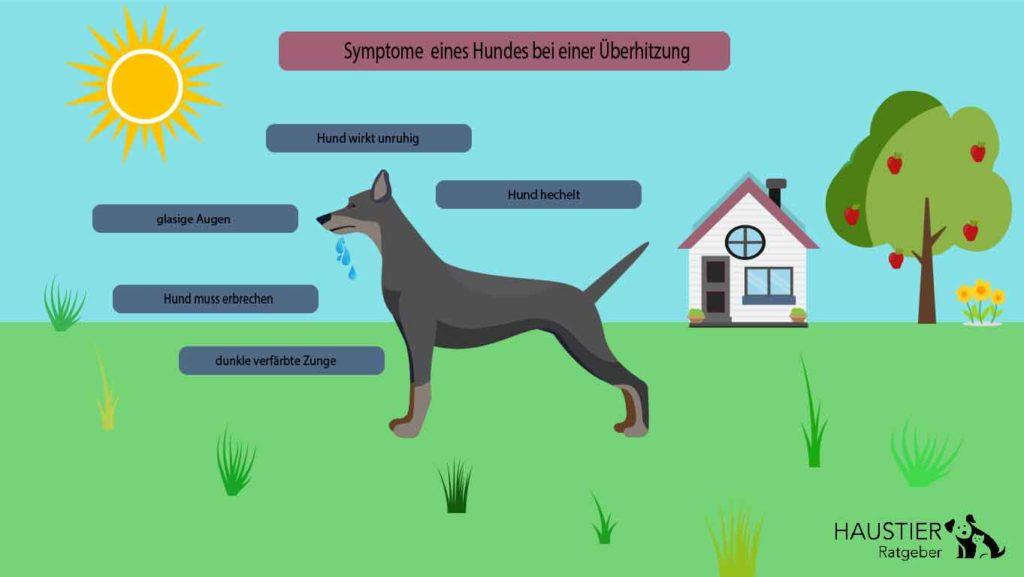 Hier veranschaulichen wir dir die Symptome eines Hundes bei einer Überhitzung.