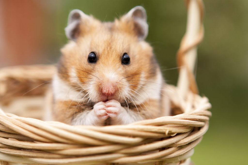 Hamster Futter