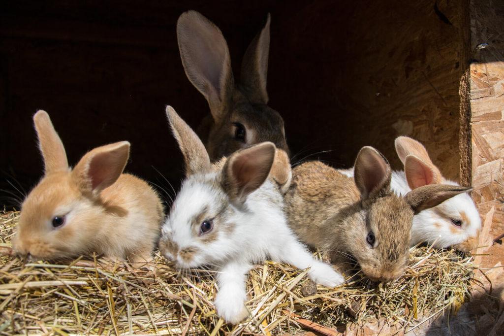Kaninchen Futter