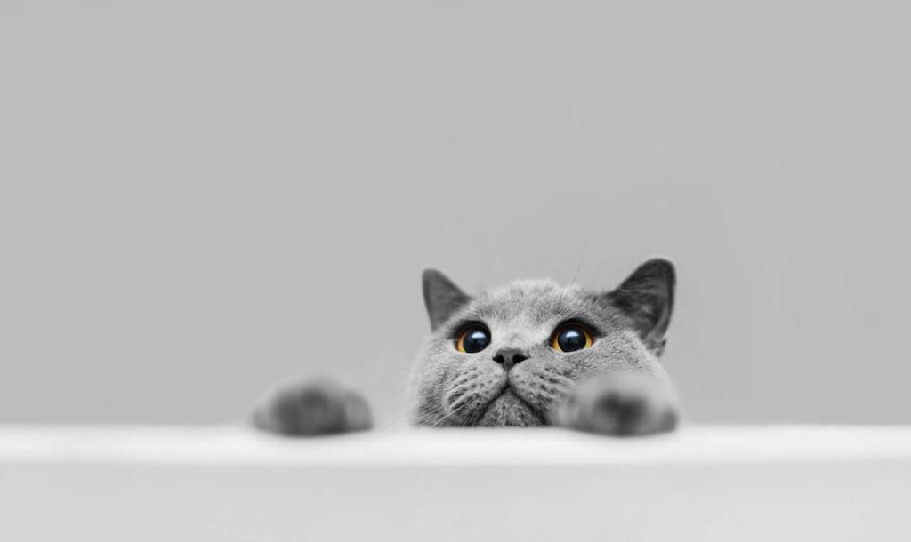Katzen erziehen
