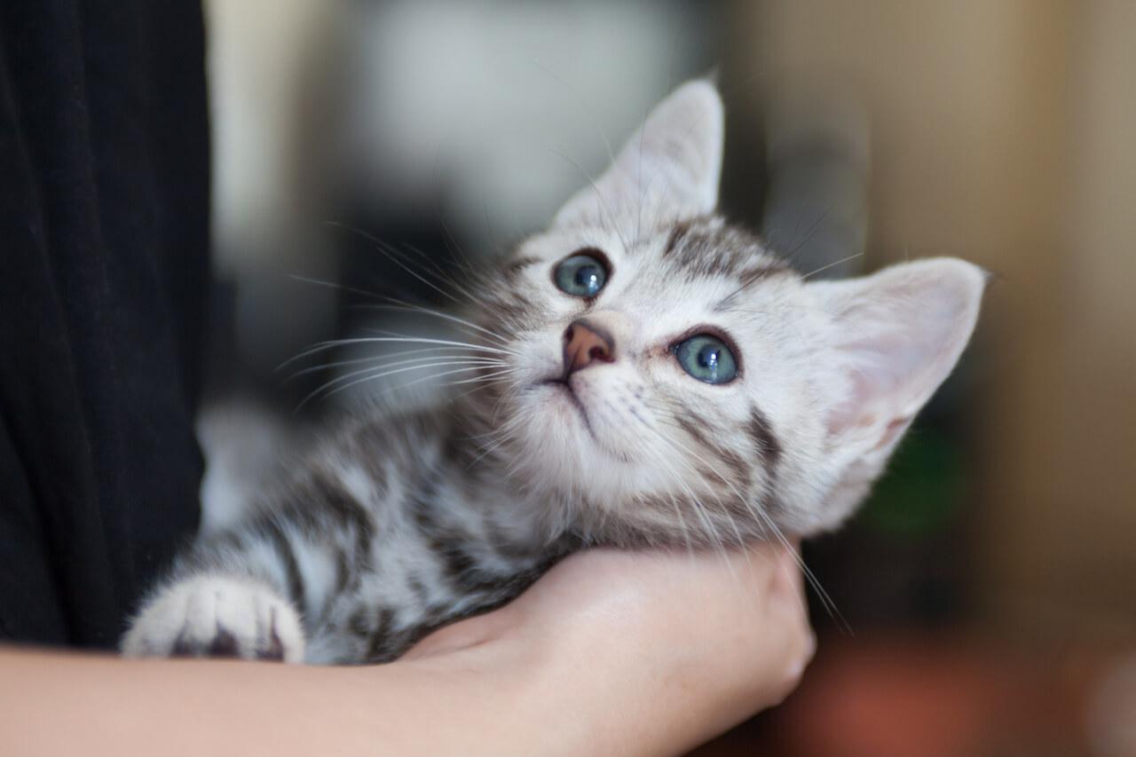 Verschenken junge katzen schweiz zu Junge Katzen