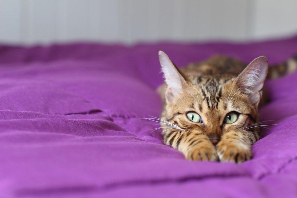Katzengeburt