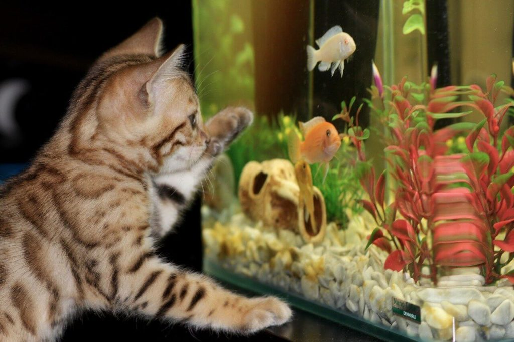 Salzwasseraquarium