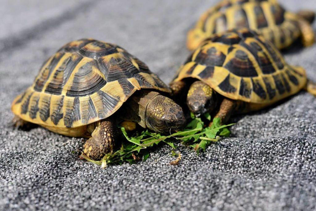 Schildkröte Haltung