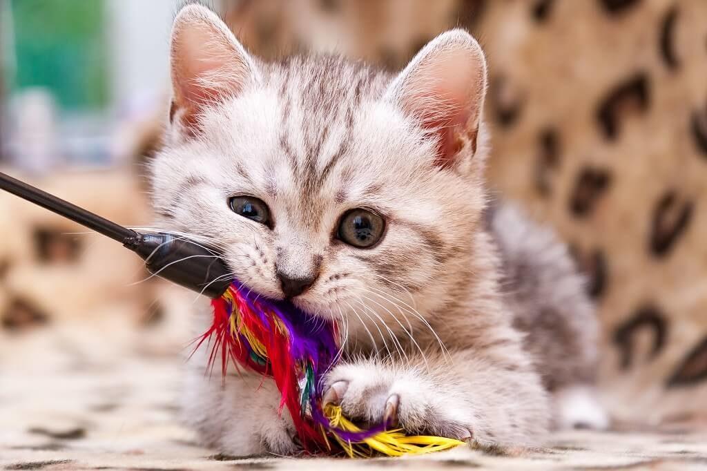 Katzenspielzeug2